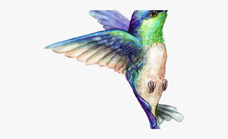 Hummingbird Clipart Summer.