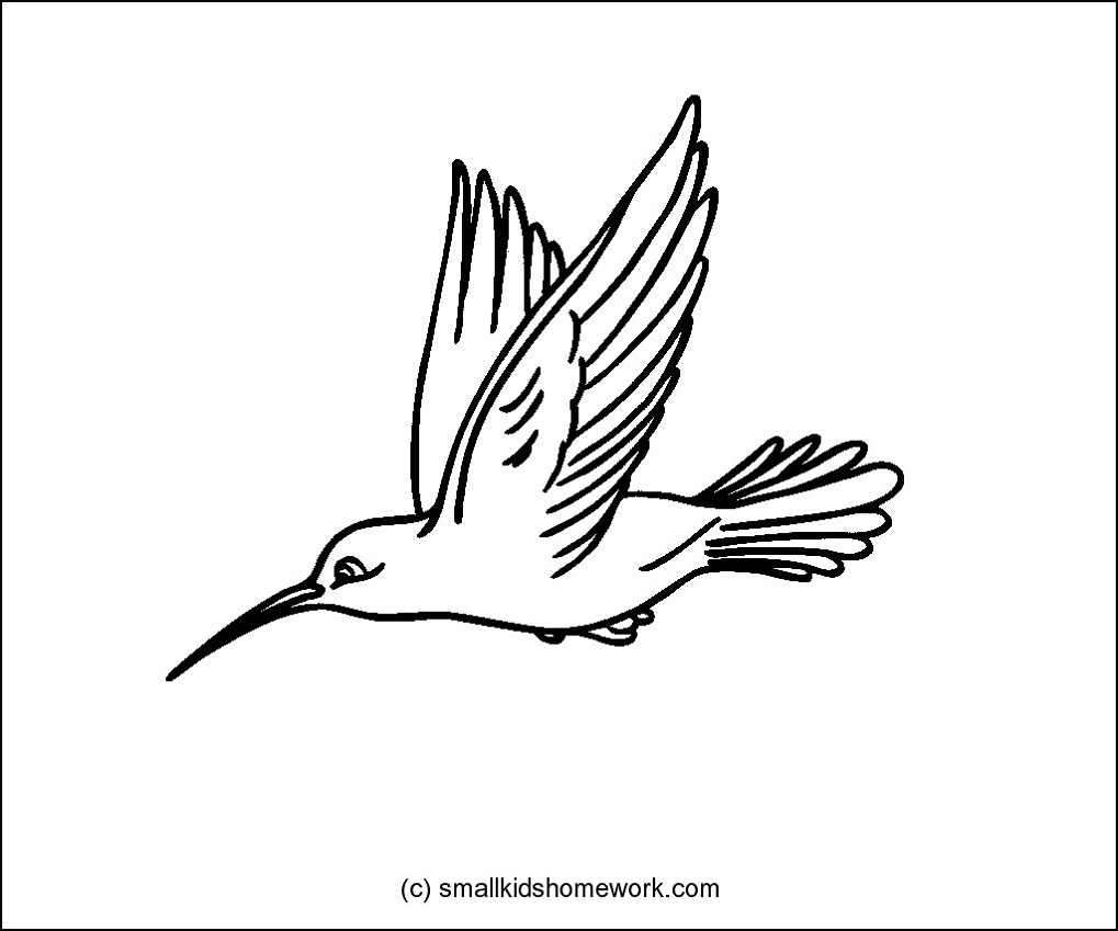 Hummingbird outline picture.