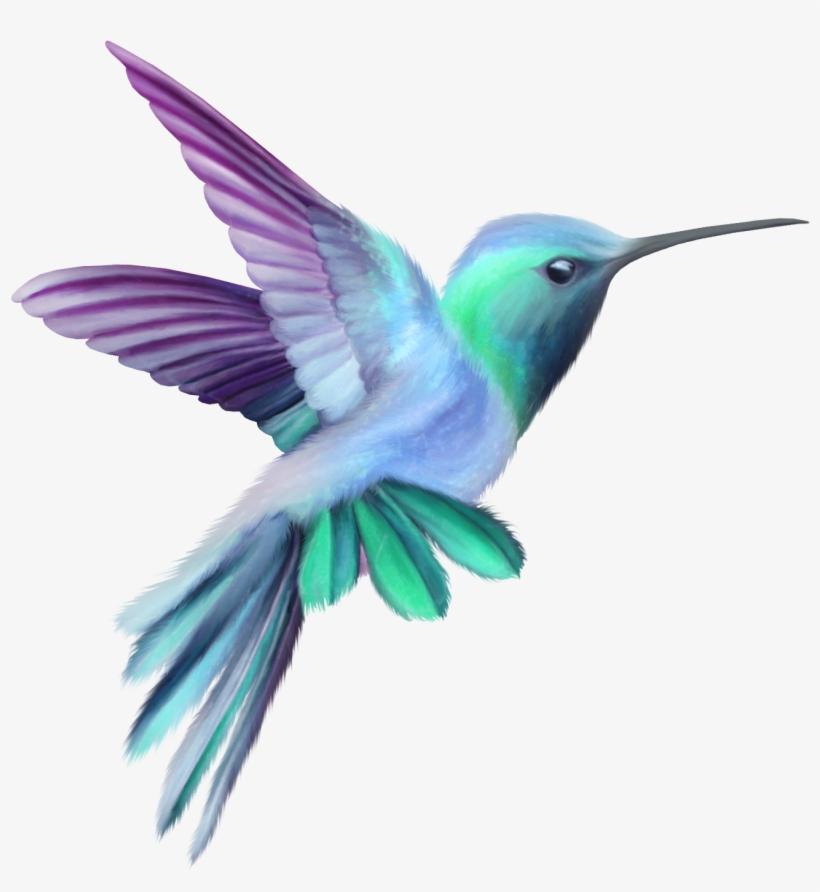 Image Result For Hummingbird.