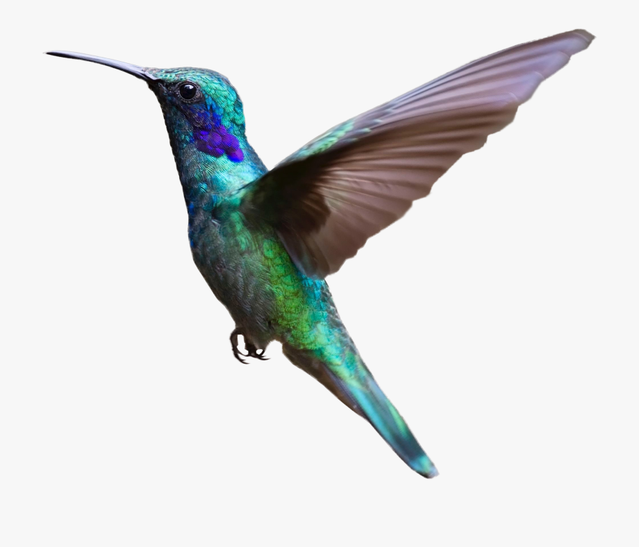 Hummingbird Clipart Transparent Background.