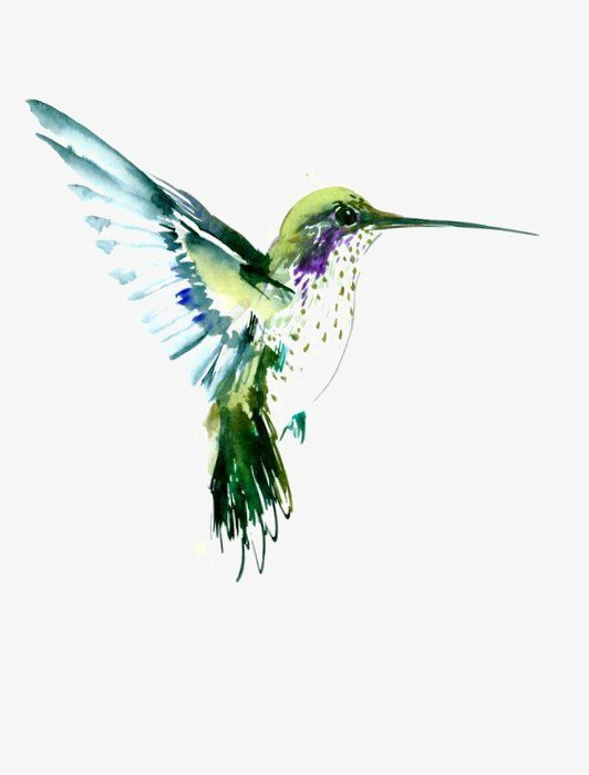 Hummingbird, Hummingbird Clipart, Hand Painted Birds.