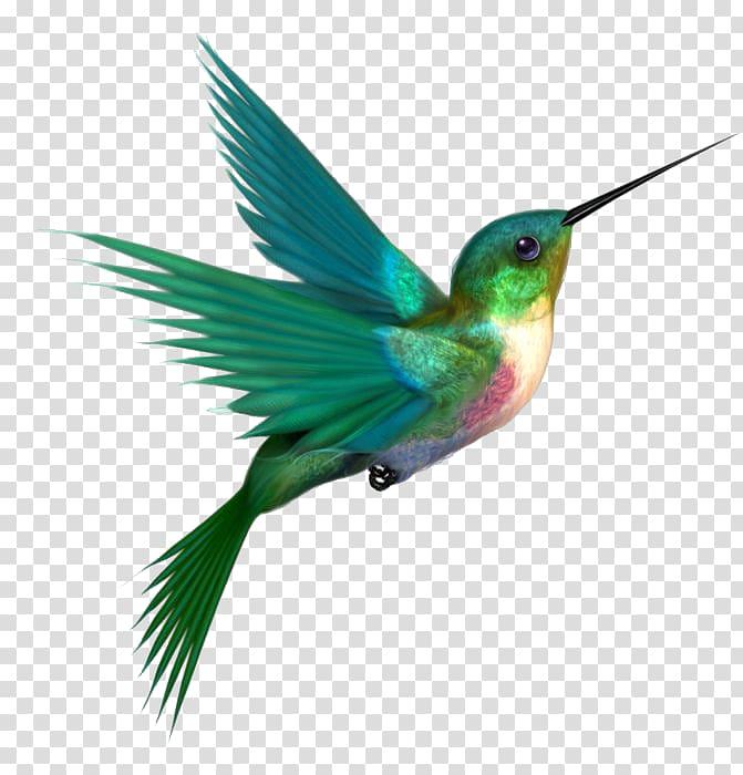 Green, beige, and pink hummingbird illustration, Hummingbird.