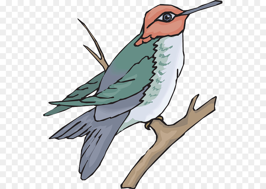 Hummingbird Drawing clipart.