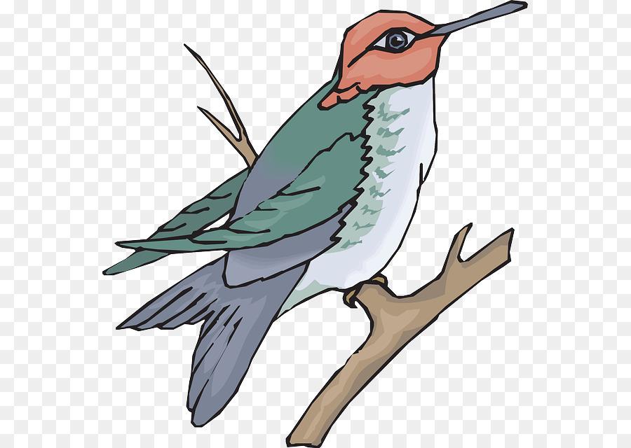 Hummingbird Drawing clipart.
