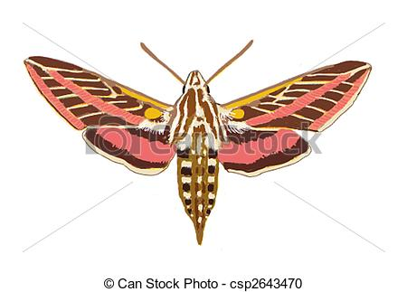 Stock Illustration of Sphinx Moth Arizona Computer Painting.