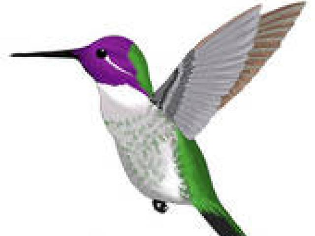 Free Hummingbird Clipart, Download Free Clip Art on Owips.com.