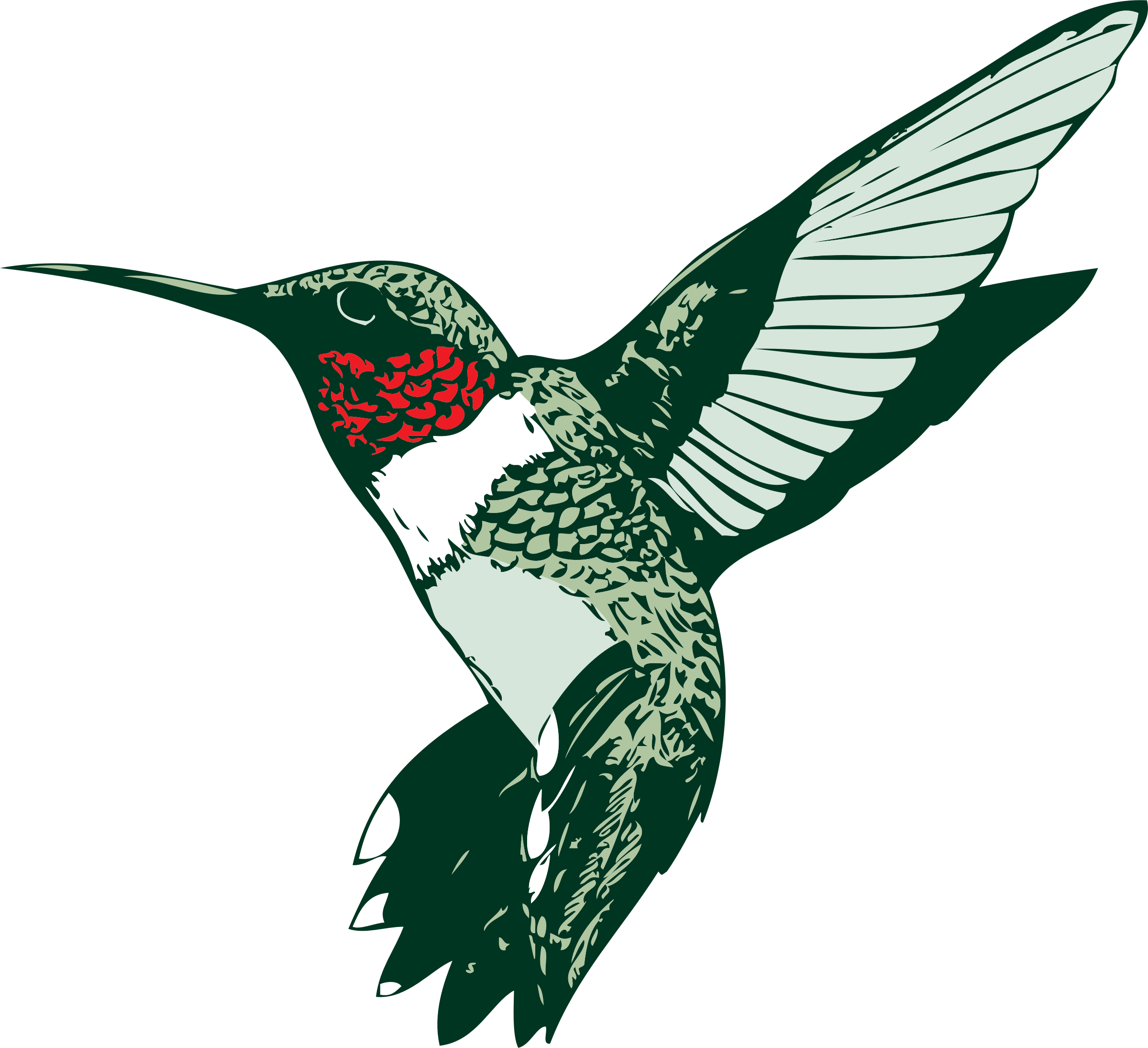 Hummingbird Graphics.