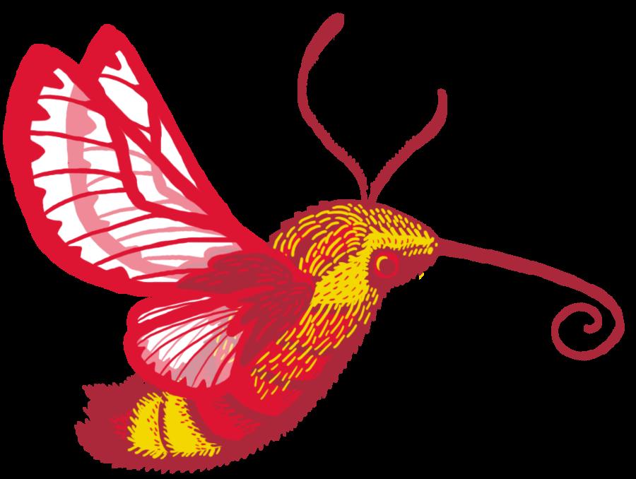Humming Bird Cartoon.