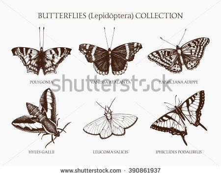 Hummingbird Moths Stock Vectors & Vector Clip Art.