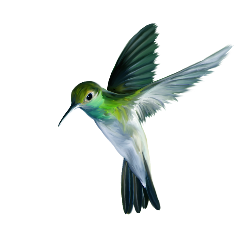 Hummingbird Art PNG Picture.