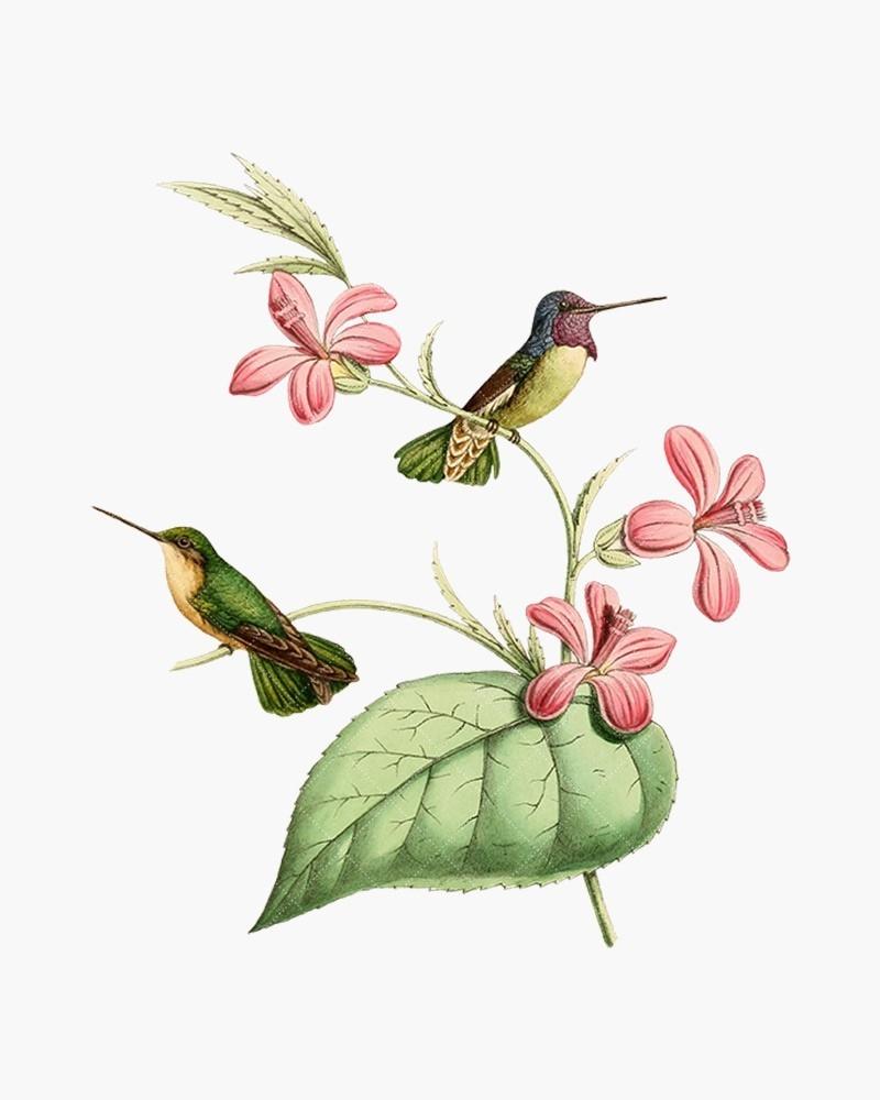 Costa\'s Hummingbird.