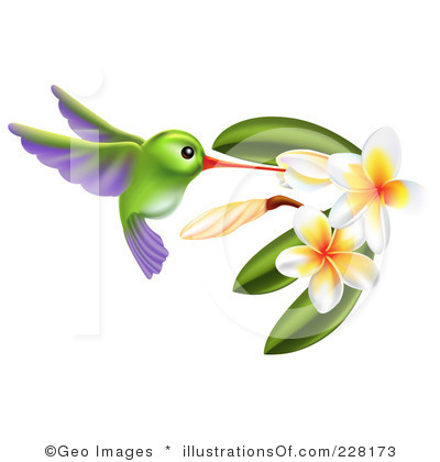 1000+ images about hummingbird clipart on Pinterest.