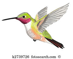 Hummingbird Illustrations and Clipart. 388 hummingbird royalty.