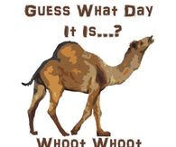 Hump Day Camel Pictures, Photos, Images, and Pics for Facebook.