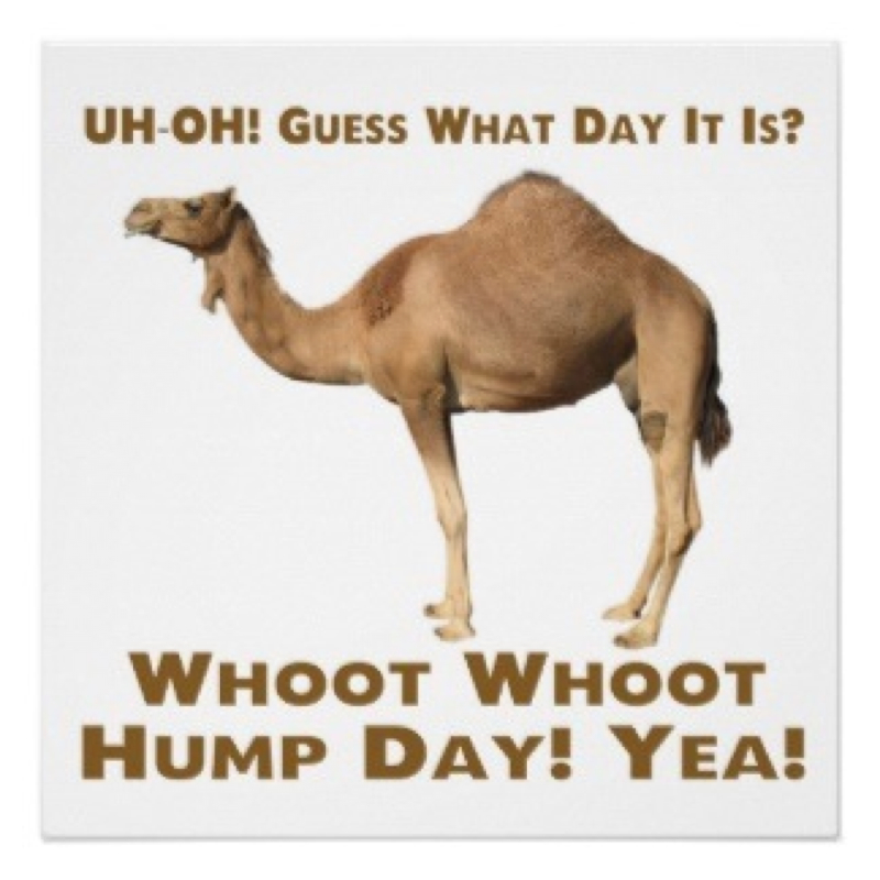 happy hump day snoopy days of the week wednesday humpday.
