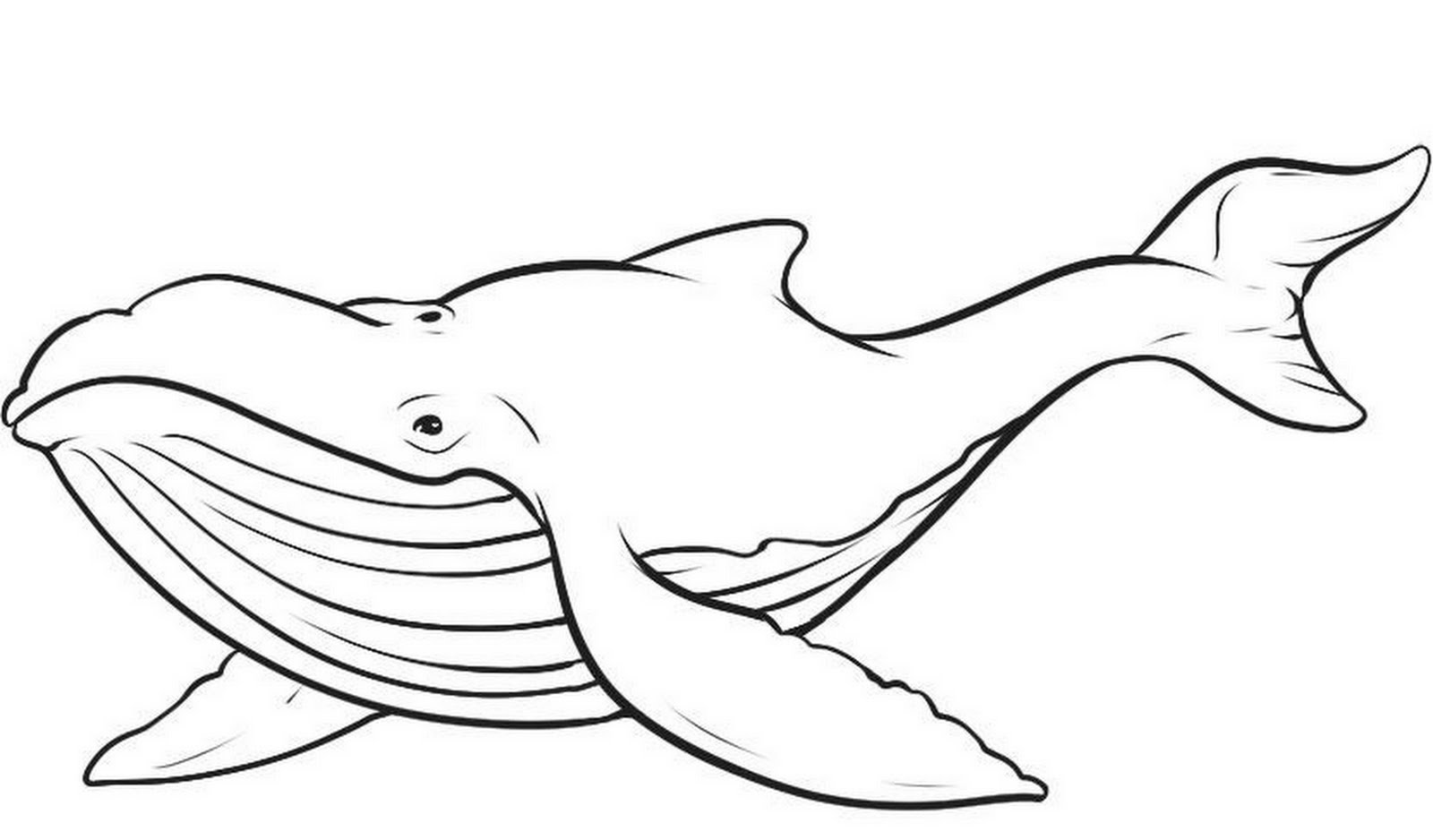Humpback Whale Black And White Clipart.