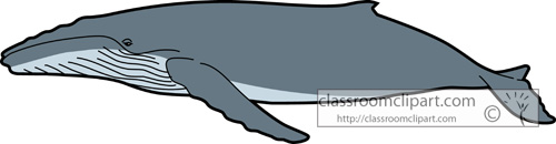 Whale Clipart : whales_humpback_whale_728 : Classroom Clipart.