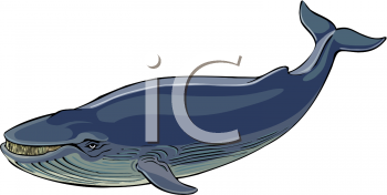 Animal Clip Art Picture of a Blue Humpback Whale.