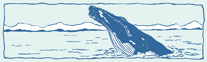 Humpback whale tails clipart.