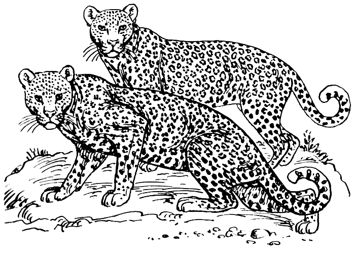 Leopard Clip Art Download.