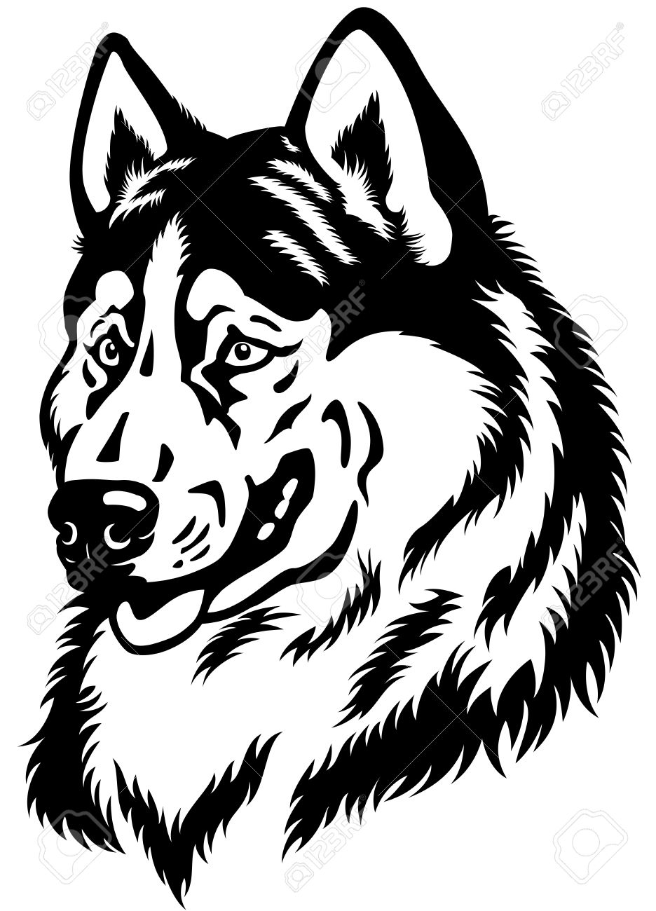 Dog Head, Siberian Husky Breed, Black And White Illustration.