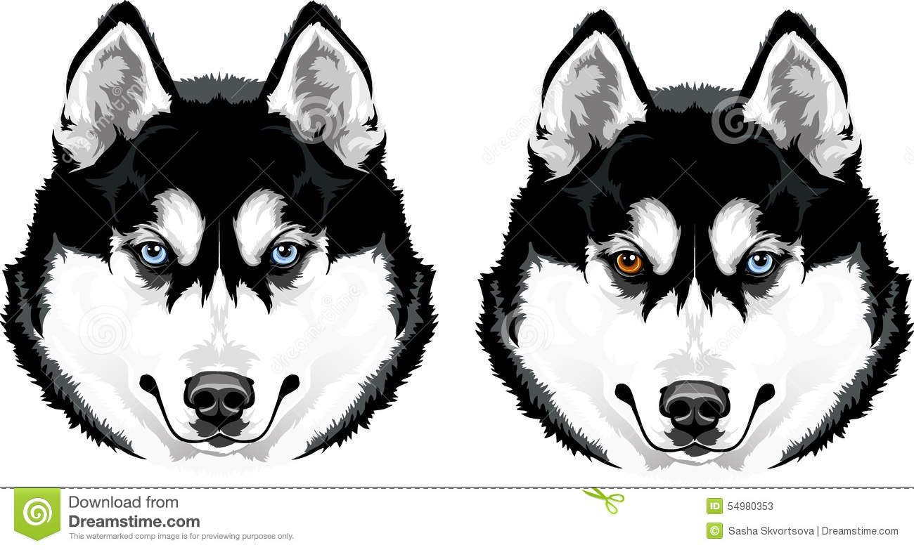 Huskies Stock Illustrations.