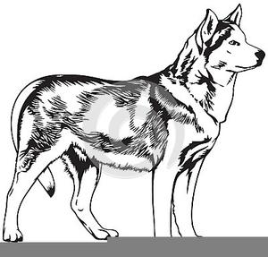 Free Clipart Husky Dog.