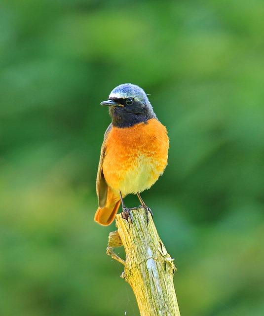 Free pictures BIRD.