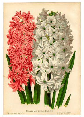 Instant Art Botanical Printable.