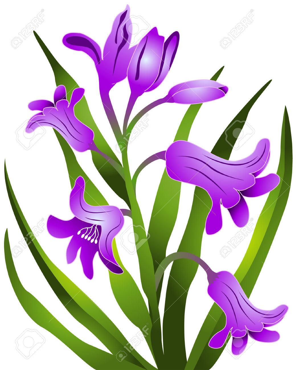 Hyacinth Flowers With Clipping Path Royalty Free Cliparts, Vectors.