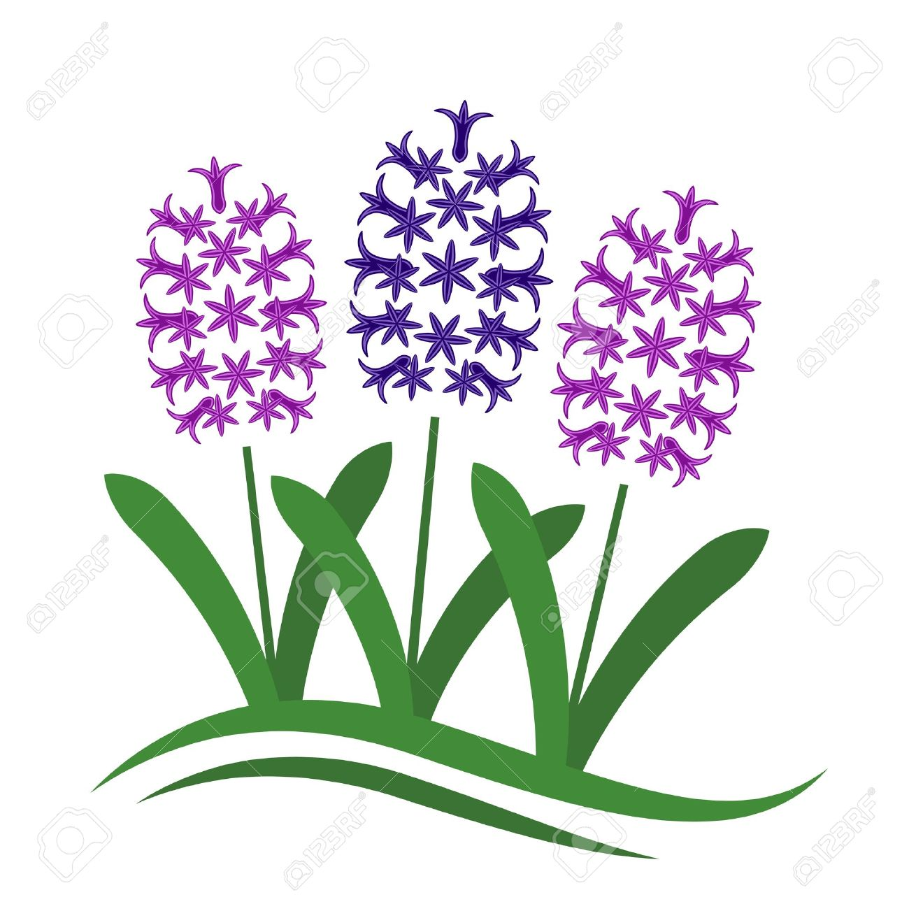 1,005 Hyacinth Stock Vector Illustration And Royalty Free Hyacinth.