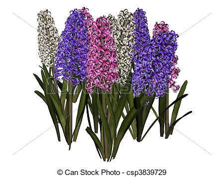 Hyacinth Illustrations and Stock Art. 364 Hyacinth illustration.