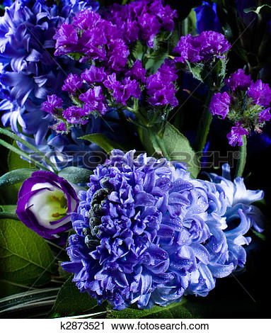 Stock Photography of deep violet hyacinthus orientalis k2873521.