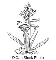 Hyacinth Clipart Vector Graphics. 244 Hyacinth EPS clip art vector.