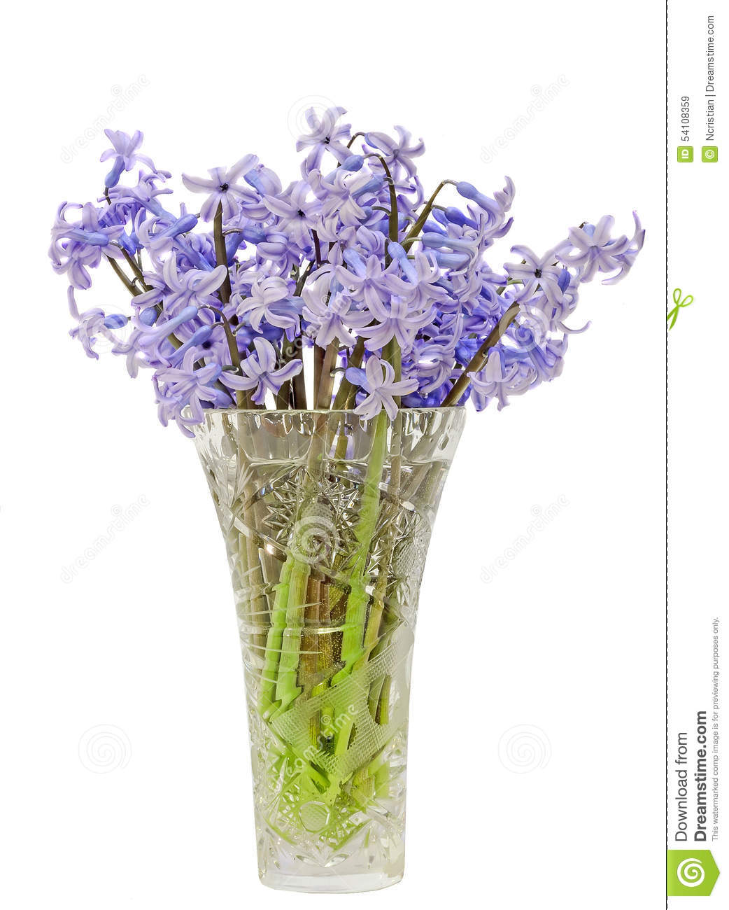 Blue Hyacinthus Orientalis Flowers (common Hyacinth, Garden.