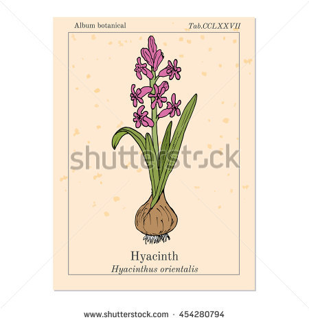 Hyacinthus Stock Vectors & Vector Clip Art.