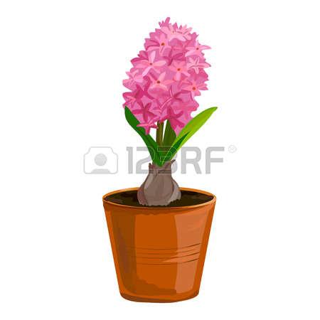883 Hyacinth Stock Vector Illustration And Royalty Free Hyacinth.