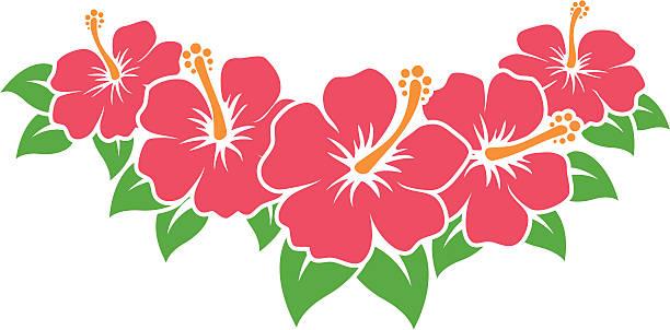Best Hibiscus Flower Illustrations, Royalty.