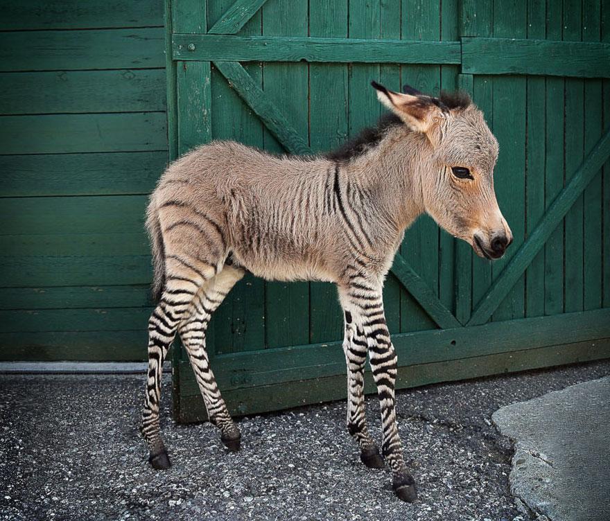 17 Amazing awesome manmade animals.