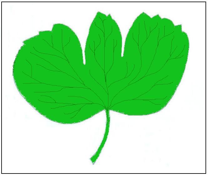 File:Ranunculus hybridus.