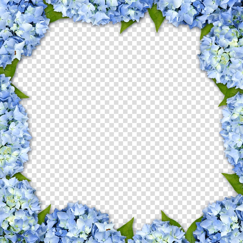 Blue hydrangeas border template, Hydrangea frame Flower.