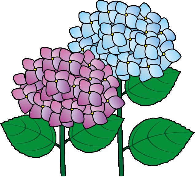 Hydrangea clipart #15