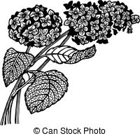 Hydrangea Clip Art and Stock Illustrations. 1,049 Hydrangea EPS.