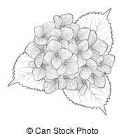 Hydrangea Clip Art and Stock Illustrations. 1,081 Hydrangea EPS.