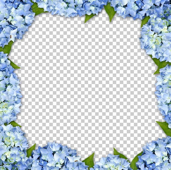 Hydrangea Frame Flower PNG, Clipart, Background, Blossom, Blue.