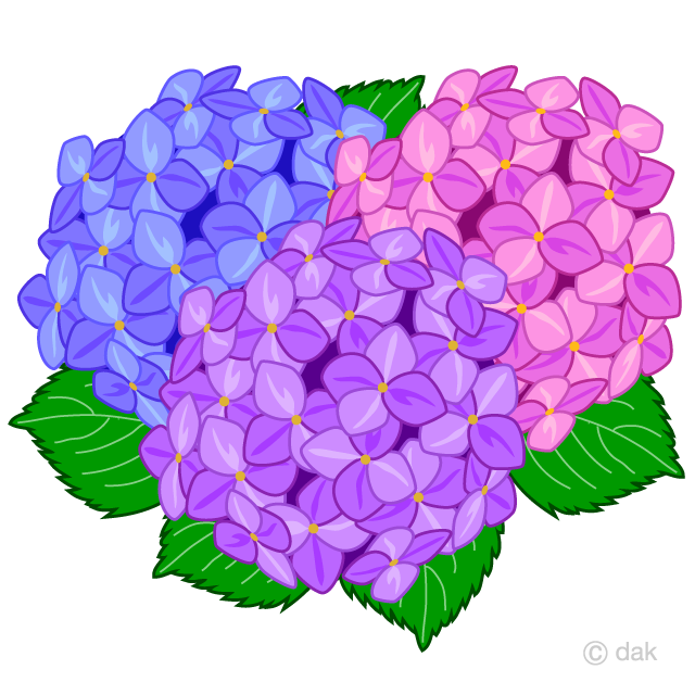 Free Cosmos Hydrangea Flower Clipart Image|Illustoon.