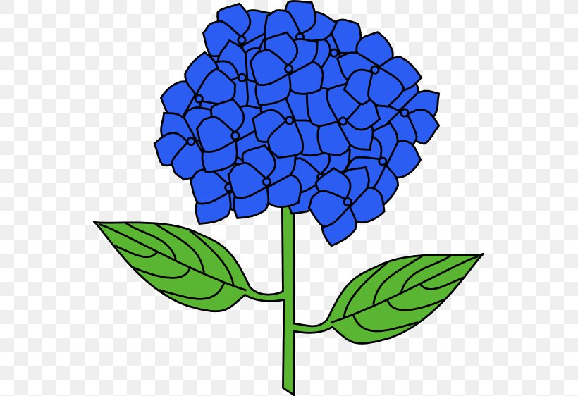 French Hydrangea Flower Drawing Clip Art, PNG, 555x562px.