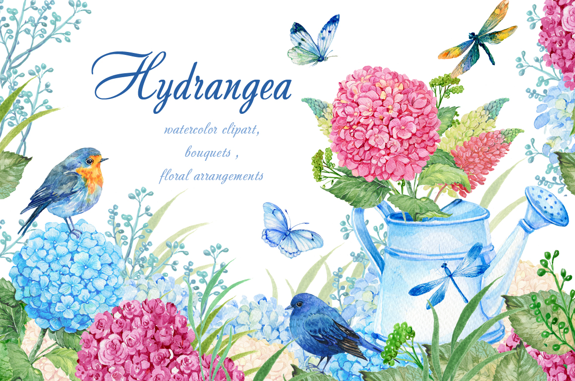 hydrangea watercolor clipart.