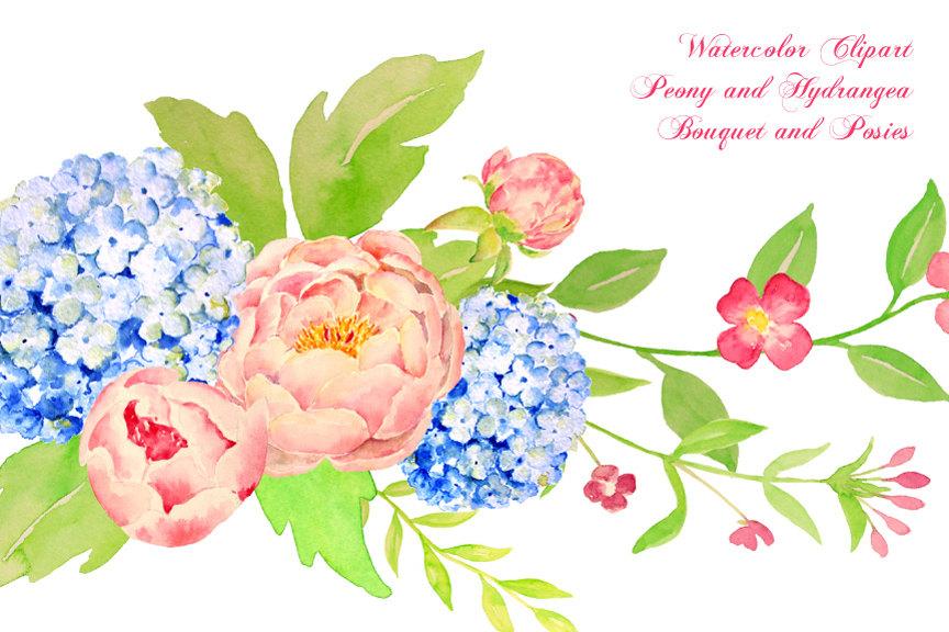 Hydrangea watercolor.