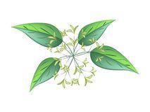 Hydrangeaceae Stock Illustrations, Vectors, & Clipart.